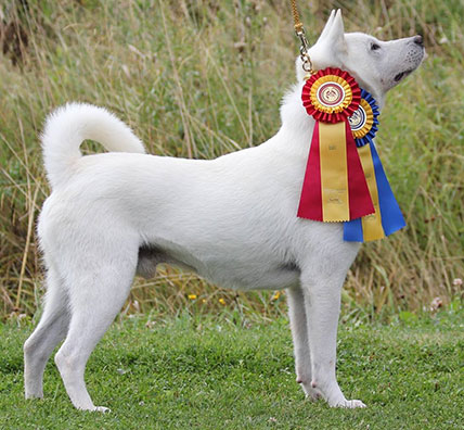 Foundation Breeder of Kishu ken in the United States